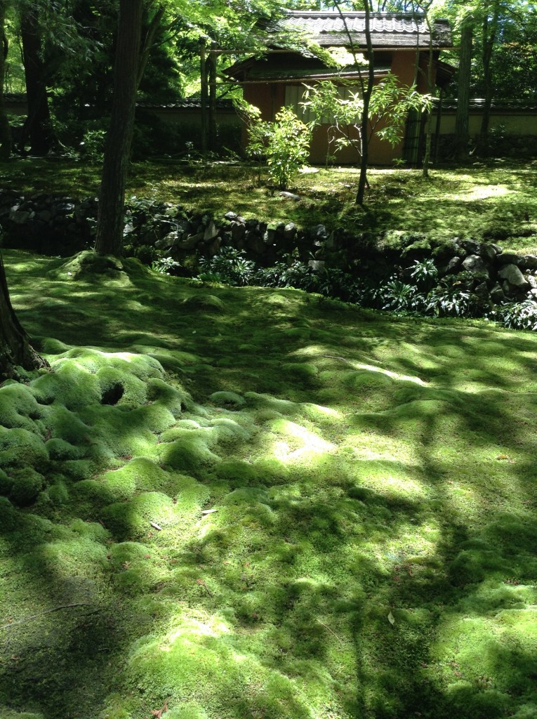 The light makes dappled patterns on the moss. - like a luxurious carpet