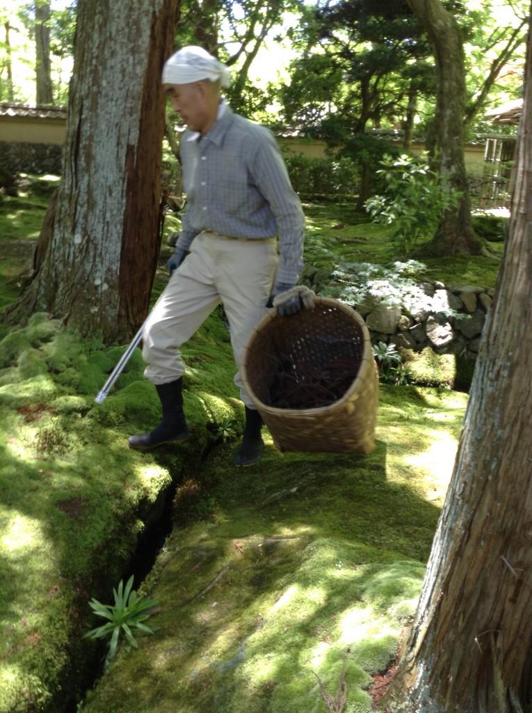 Tending the moss garden