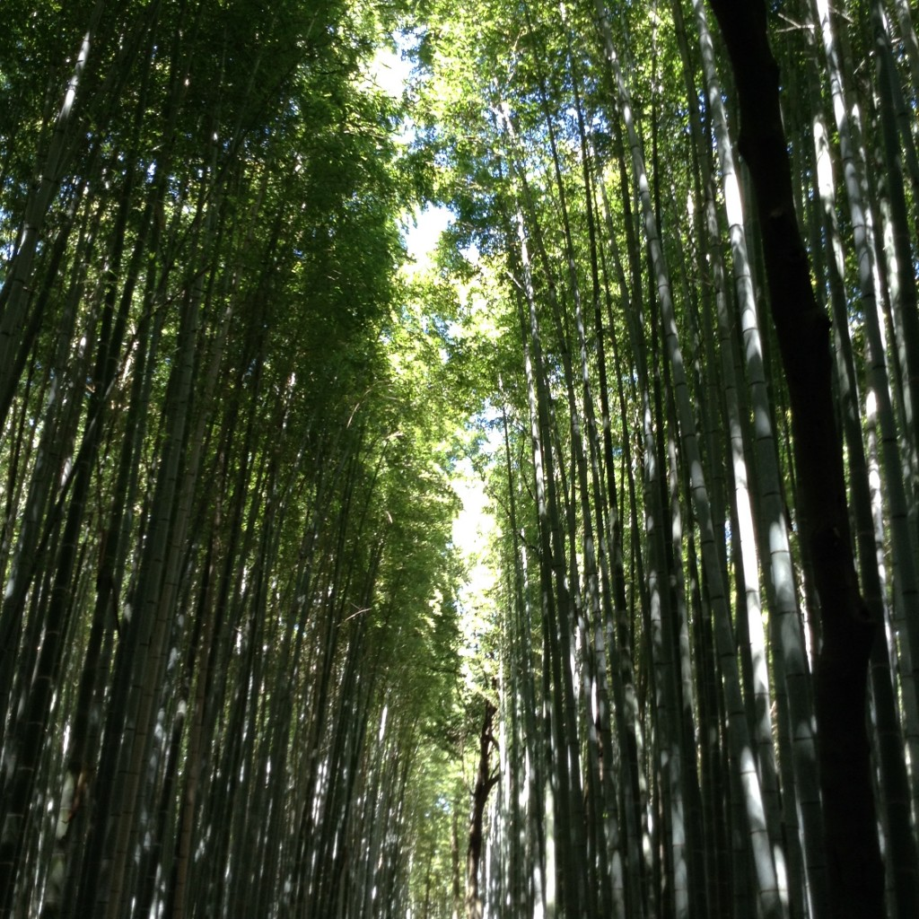 Avenue of bamboos near the temple